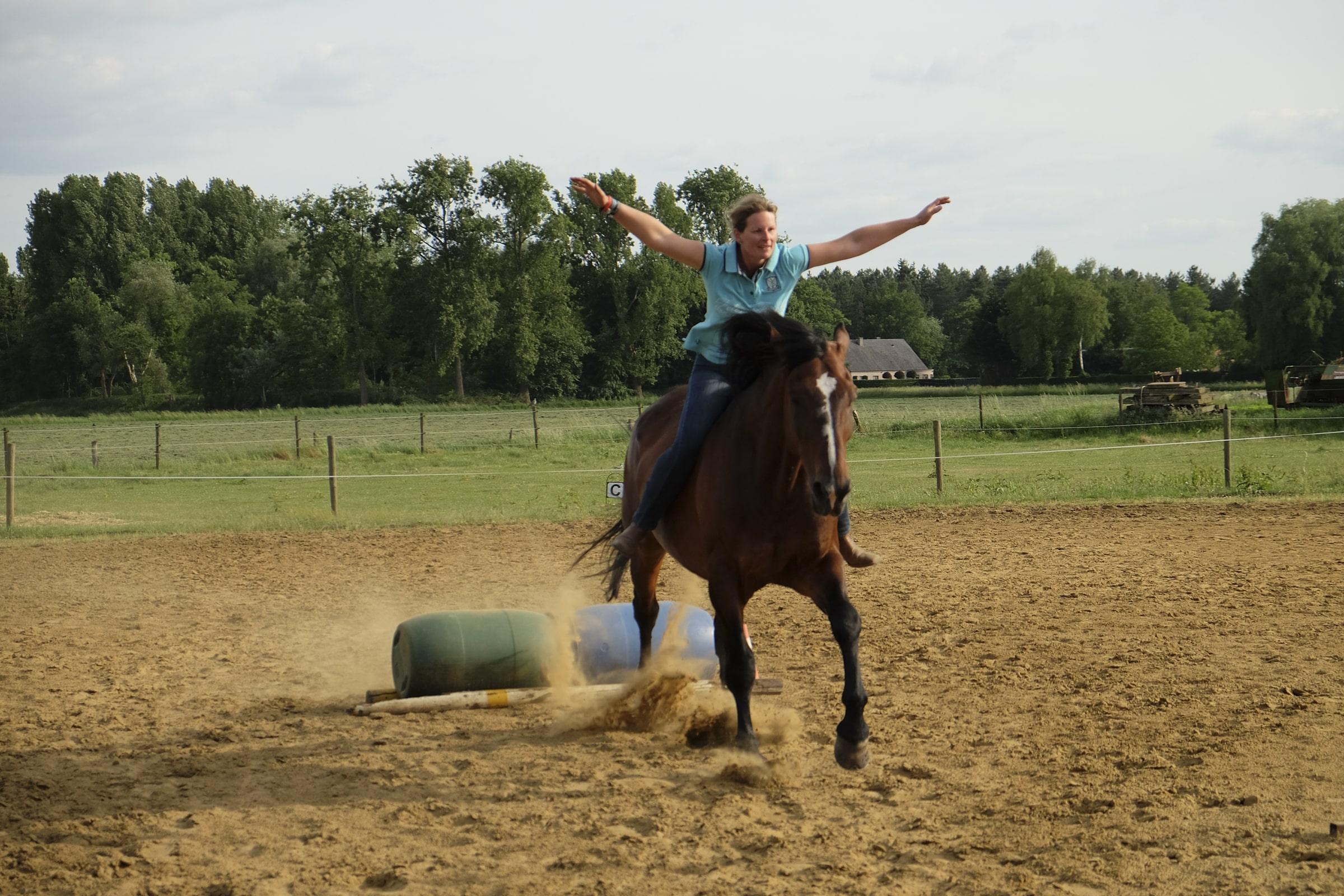 dreamteam paard