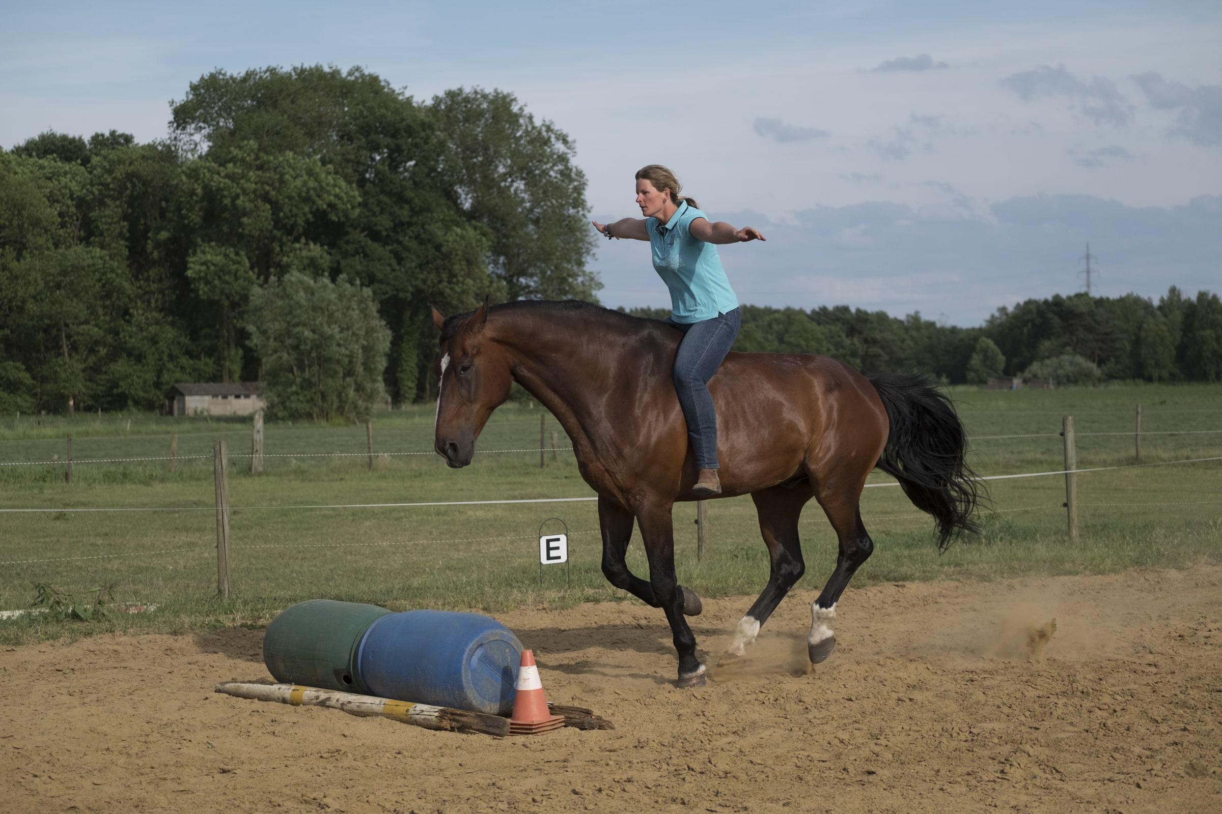 paard vriendschap team