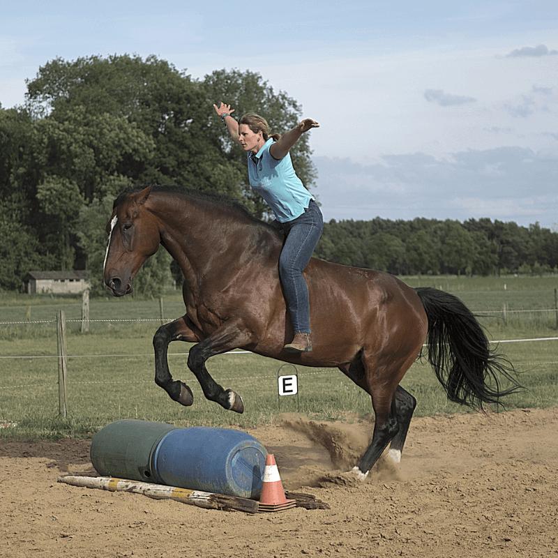 """digitale gids """"het geheim om goed te zijn met en voor paarden"""" springen vrijheid paard training - dorienlambrechts.com"""